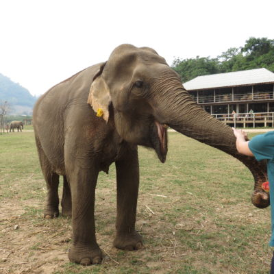 Visiting the Elephant Nature Park in Chiang Mai